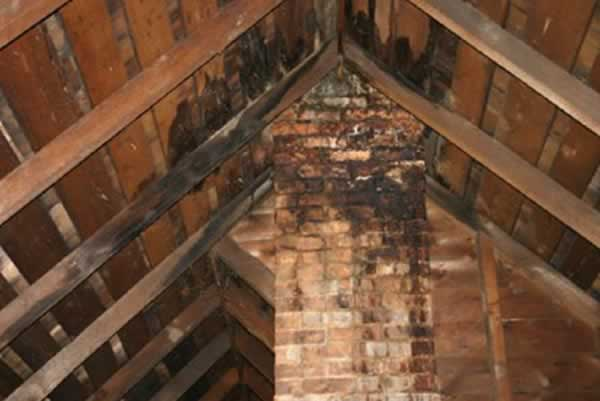 damaged attic insulation