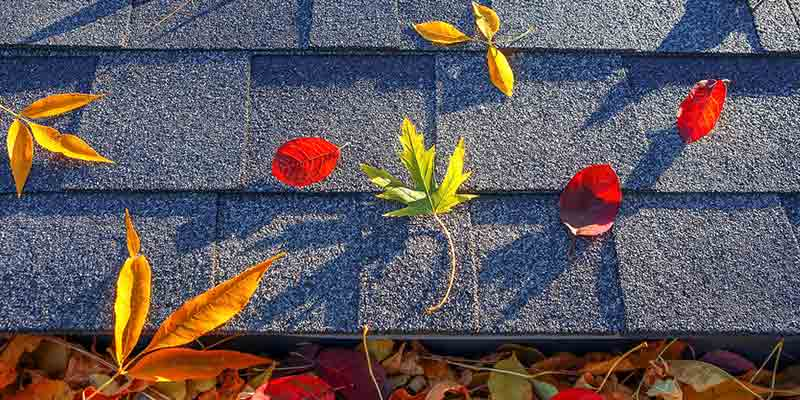 gutters clogged fall leaves