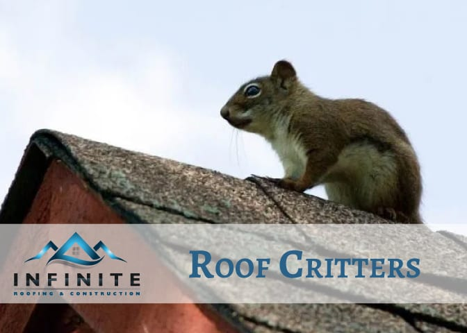 roof critters